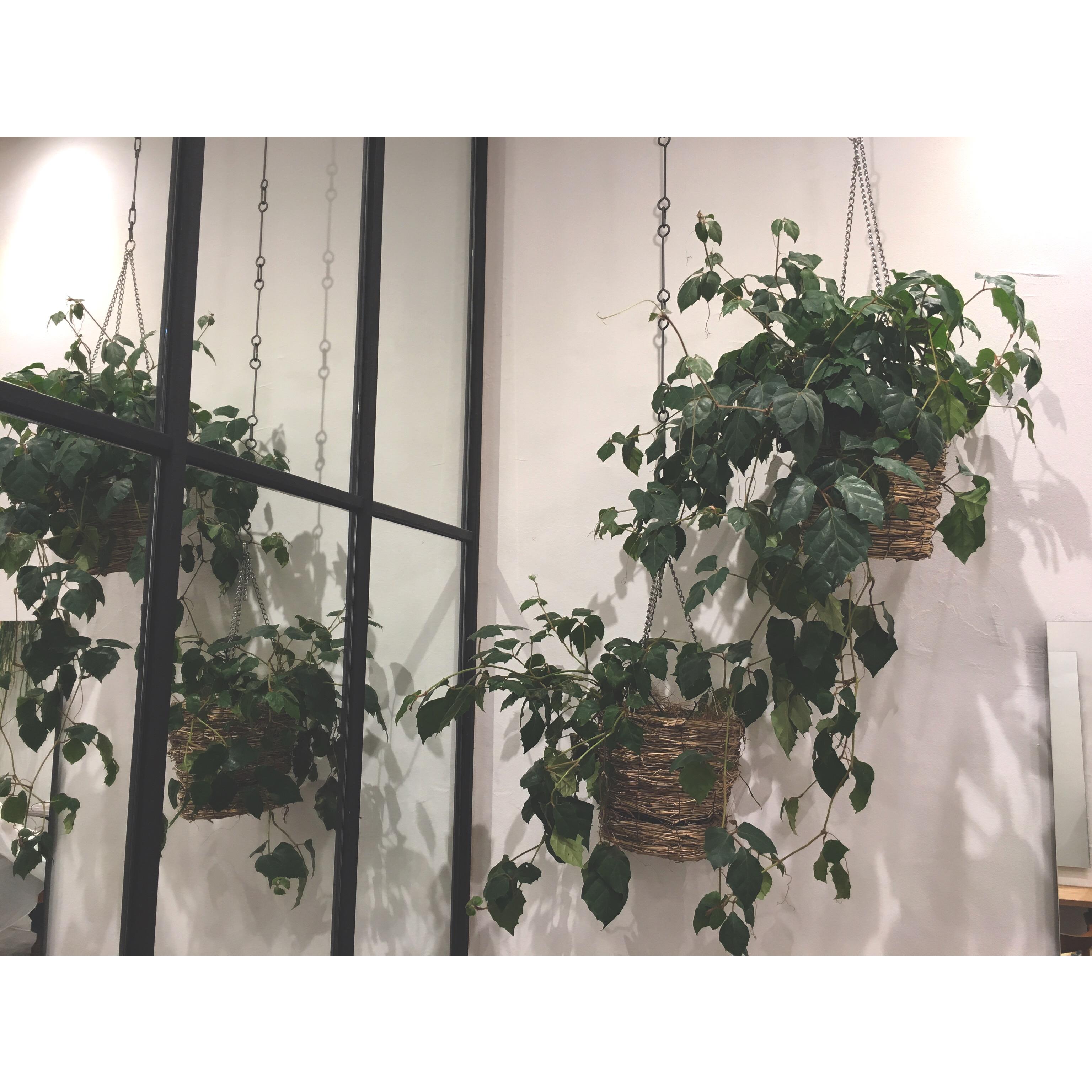 植物が成長してます!