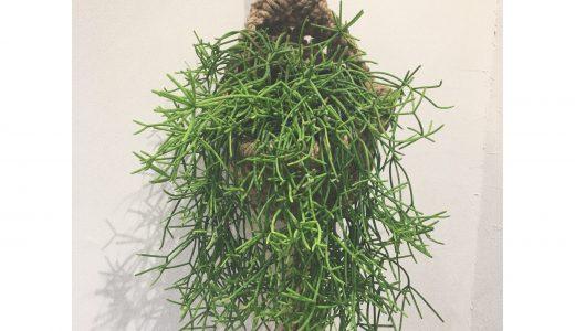 新しい植物入りました